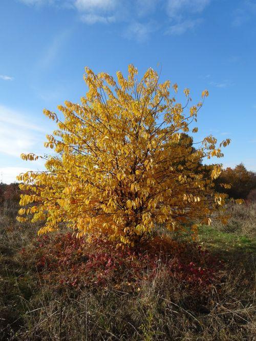 bush foliage autumn
