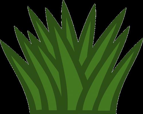 bush foliage gardening