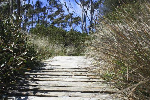bush track tasmania