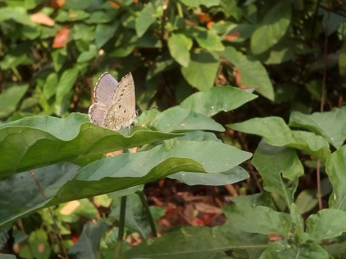 bush autumn leaves butterfly
