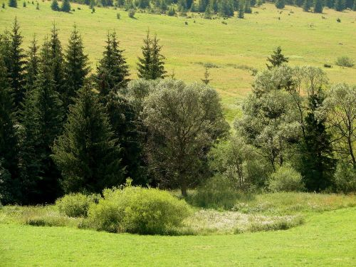 bush forest meadow