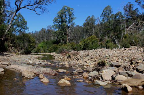 krūmas,upė,srautas,akmenys,lova,gully
