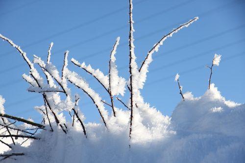 bush snow eiskristalle