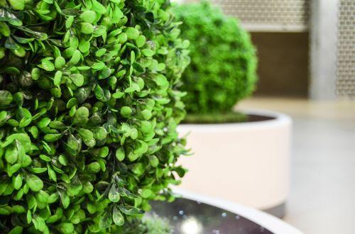 bush green artificial