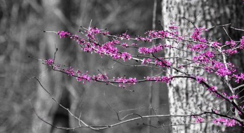 bush scrub pink