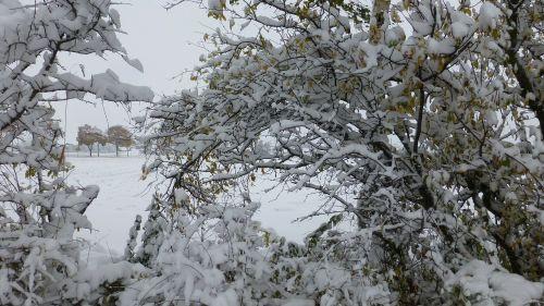 bush snowy scrub