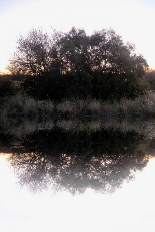 Bush Reflection