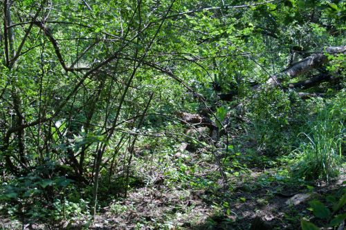 Bushes And Thicket