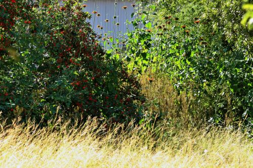 Bushes And Veld