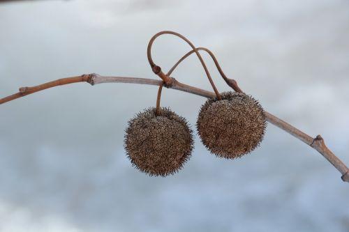 butter balls nuts seeds
