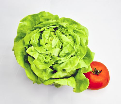 Butter Lettuce And Tomato