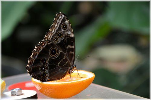Butterflies 06