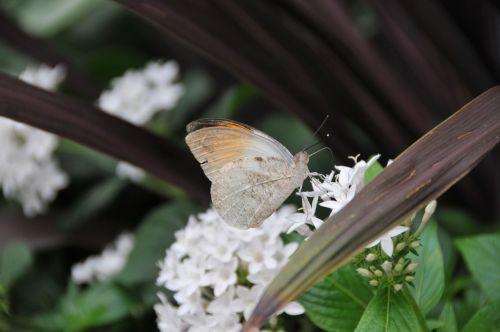 butterflies krohn conservatory butterfly