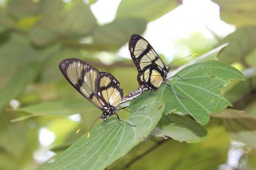 butterflies nature procreate