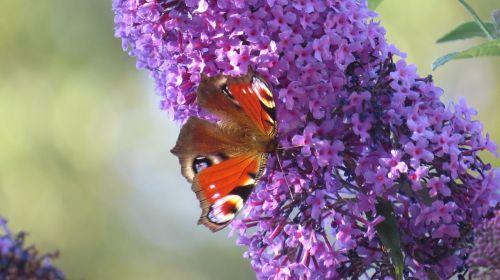 butterflies garden butterfly