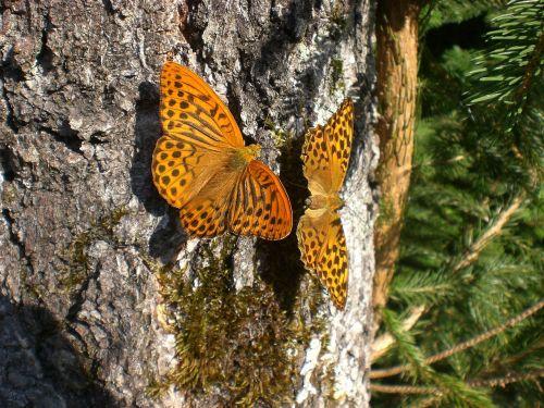 butterflies log orange
