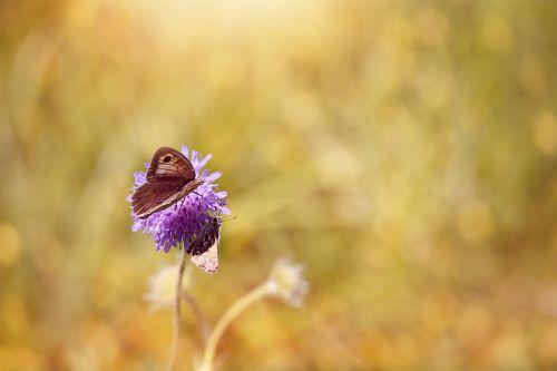 butterflies flower blossom