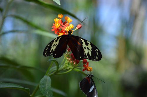 butterflies green nature