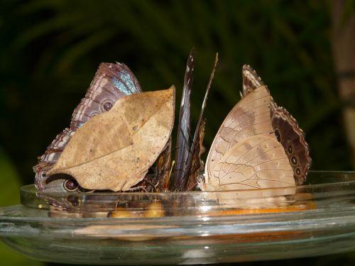 butterflies butterfly house sugar water