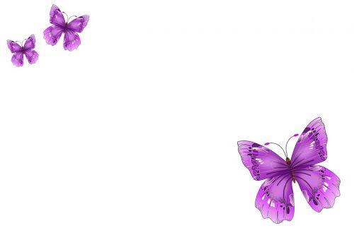 butterflies postkartenmotiv background