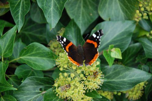 butterflies animals grue