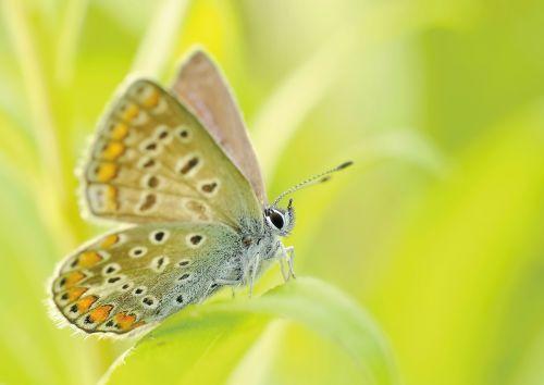 butterflies insect bezkręgowiec