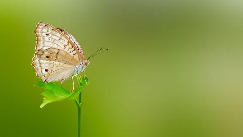 butterfly matting macro