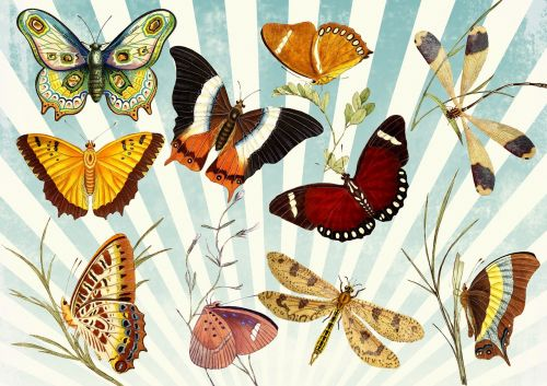butterfly vintage collage
