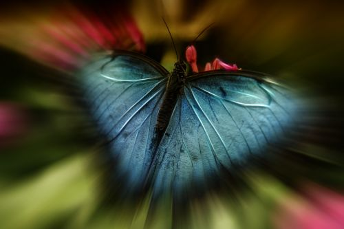 butterfly blue abstract