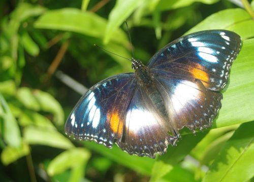 butterfly nature beauty