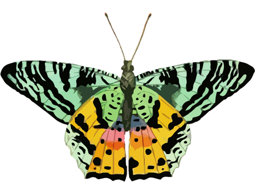butterfly clip art colorful