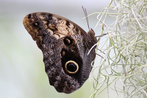 butterfly nature eye