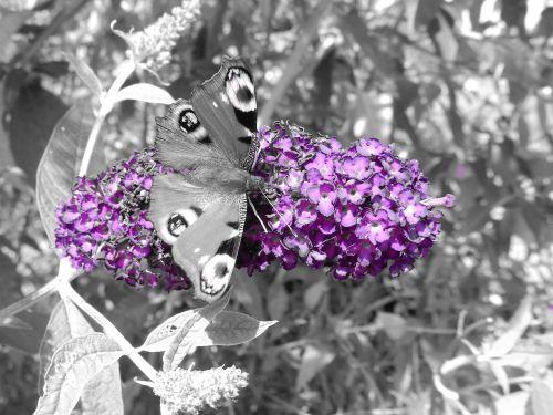 butterfly butterfly tree flower