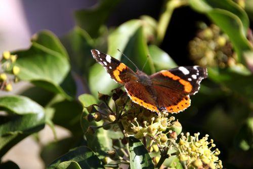 butterfly sun leaves