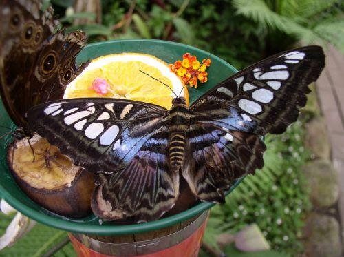 butterfly maximilian park hamm