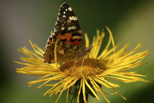 butterfly jo boonstra groningen
