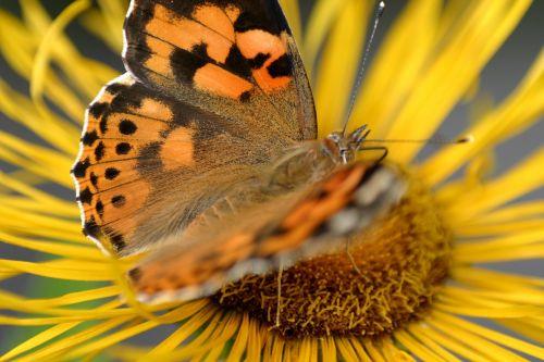 butterfly flower jo boonstra