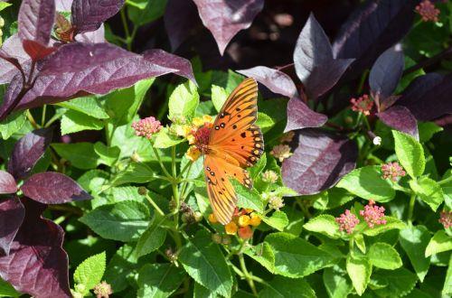 butterfly garden spring