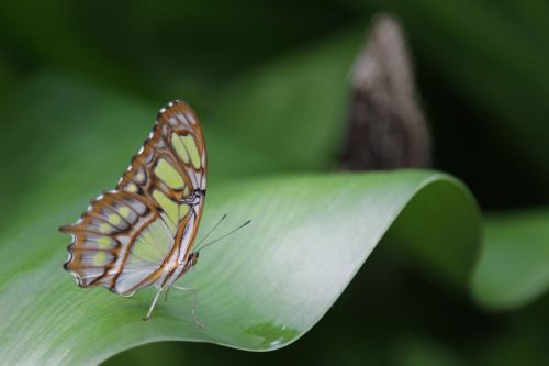 butterfly wings insect