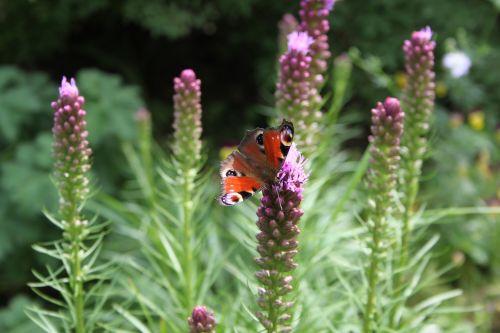 butterfly garden summer