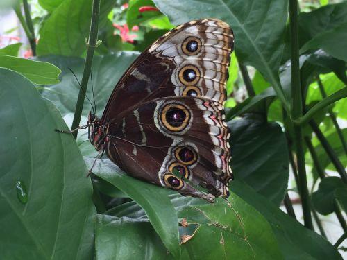 drugelis,kamufliažas,vasara,vabzdys,gamta,sparnai,natūralus,entomologija,saulėtas