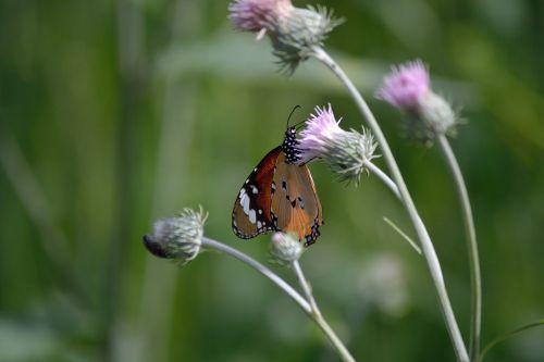 butterfly flora garden
