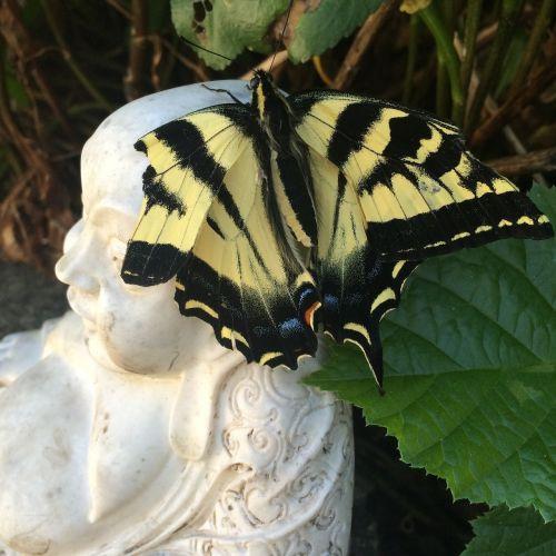 butterfly buddha nature