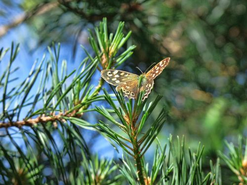 butterfly nature summer
