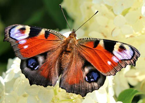 butterfly wings flower