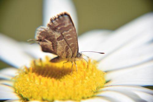 butterfly macro small butterfly
