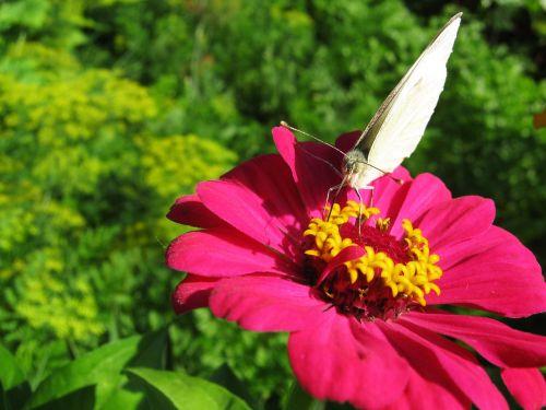 butterfly butterfly on a flower pink flower