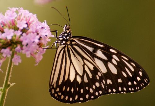 butterfly flower exotic