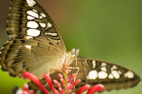 butterfly insect spots
