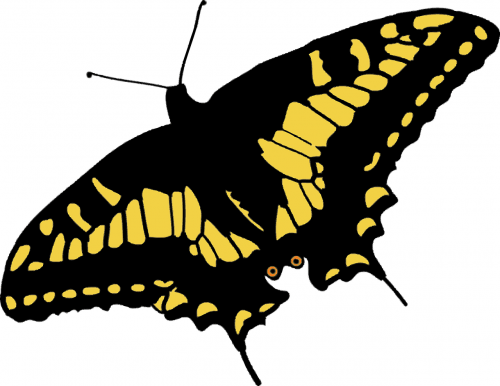 butterfly nature papilio machaon